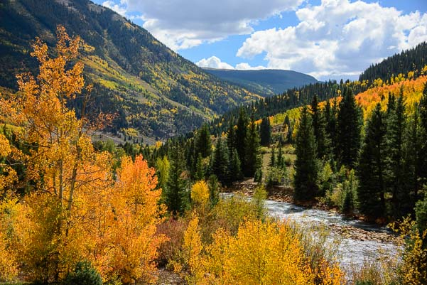 Golden Aspen in autumn in the San Juan Mountains between Ouray and Silverton Colorado