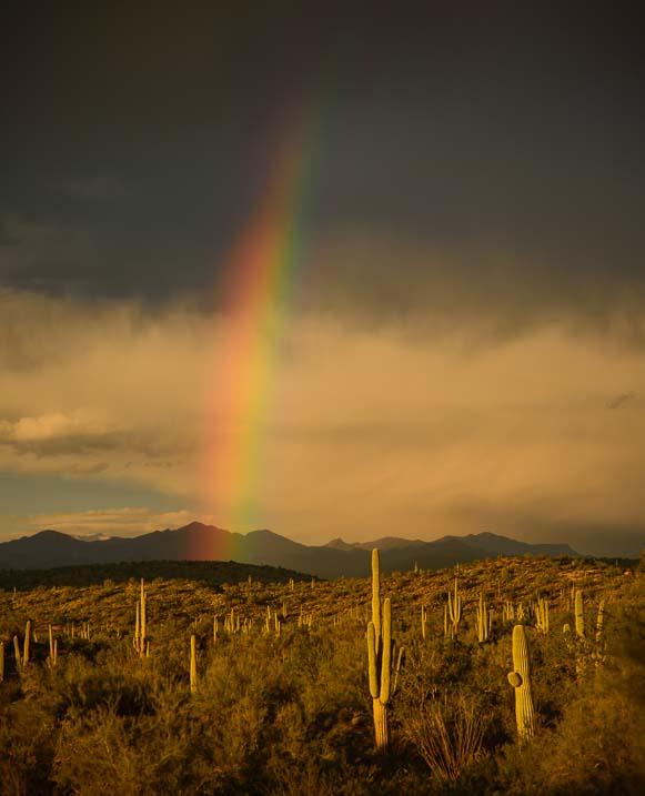 Rainbow over saguaro cacti in Arizona