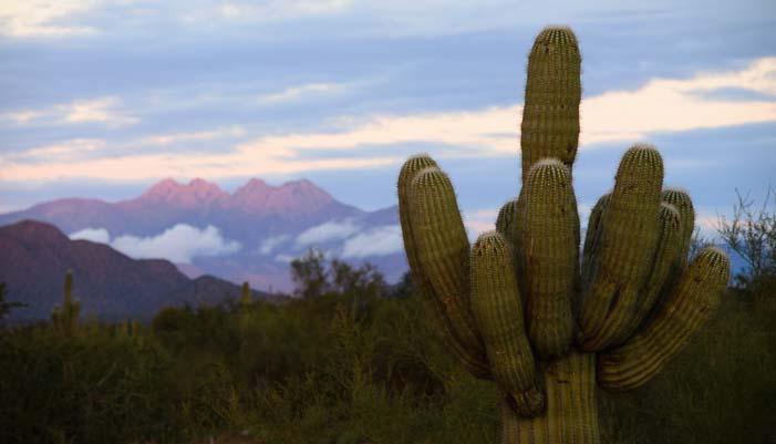 A saguaro cactus next to Four Peaks mountains at sunset in Arizona