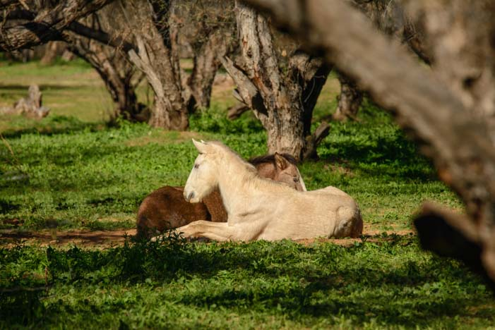 Wild horses in wedded bliss