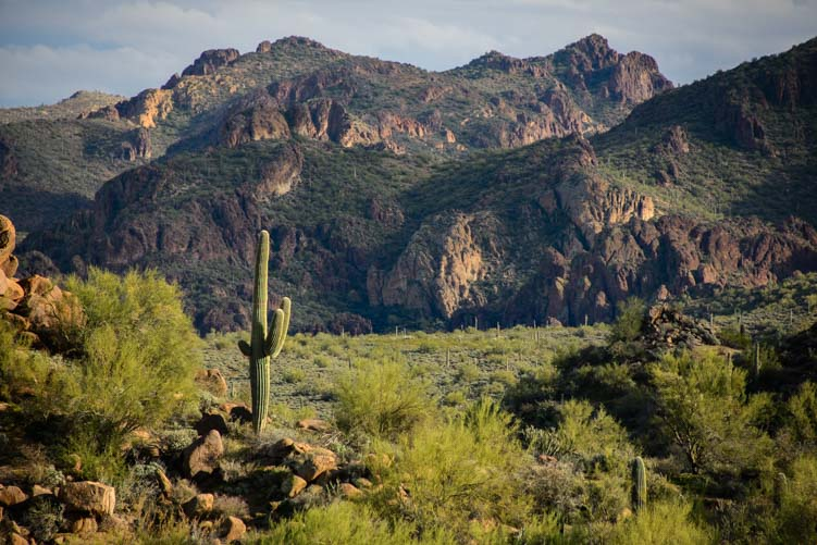 Sonoran Desert scenery near Phoenix Arizona
