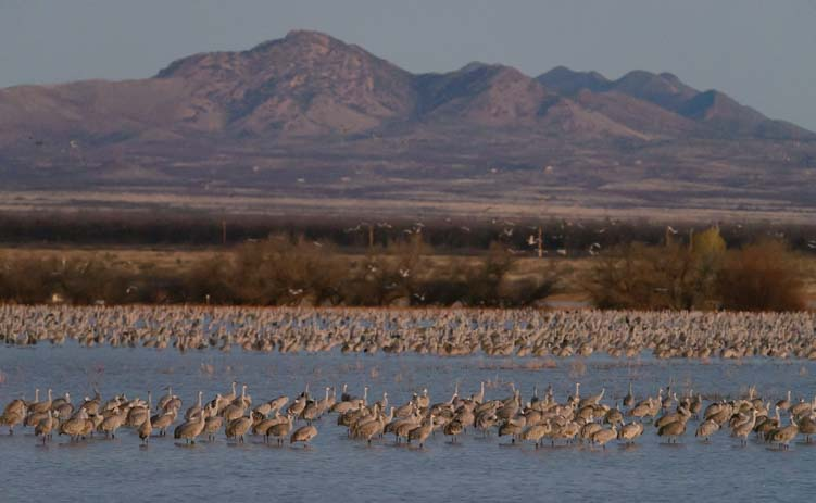 Flocks of birds standing in a pond at sunrise
