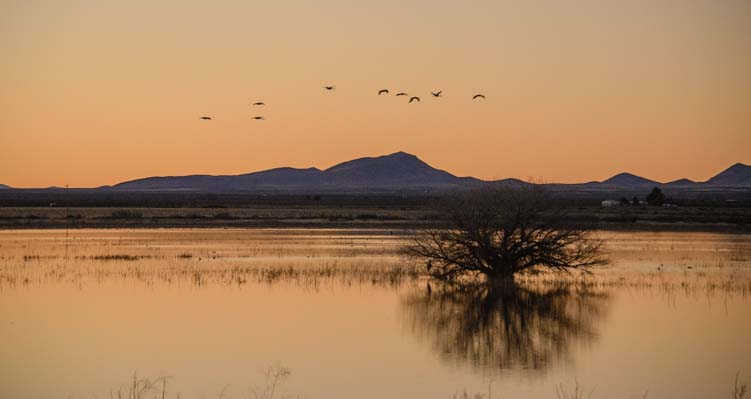 The first sandhill cranes arrive at the lake
