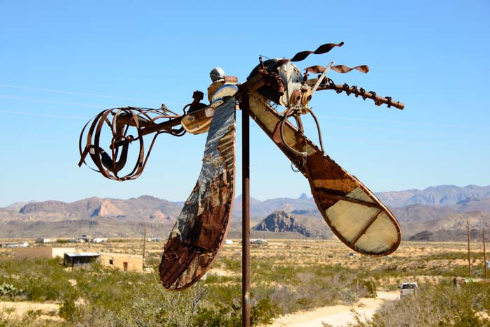 Flying bug in Terlingua Texas