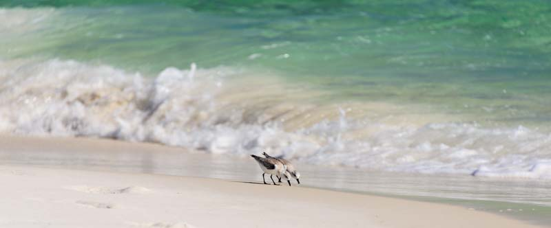 Twin seagulls on a white sand Florida beach