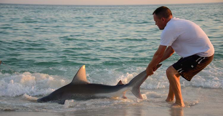 Fisherman pulls shark onto Florida beach
