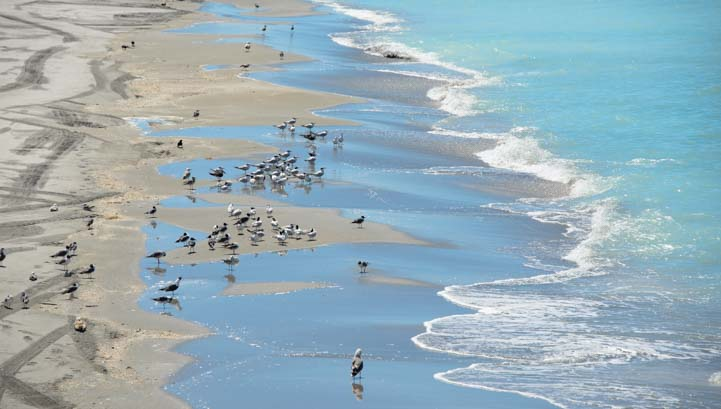 Seagulls at Venice Beach Florida