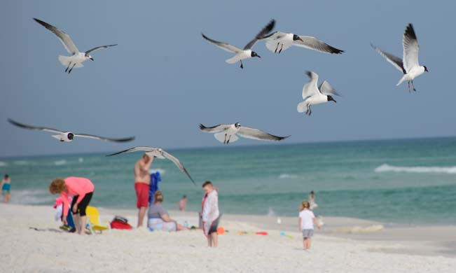 Seagulls flying over people on Florida beach