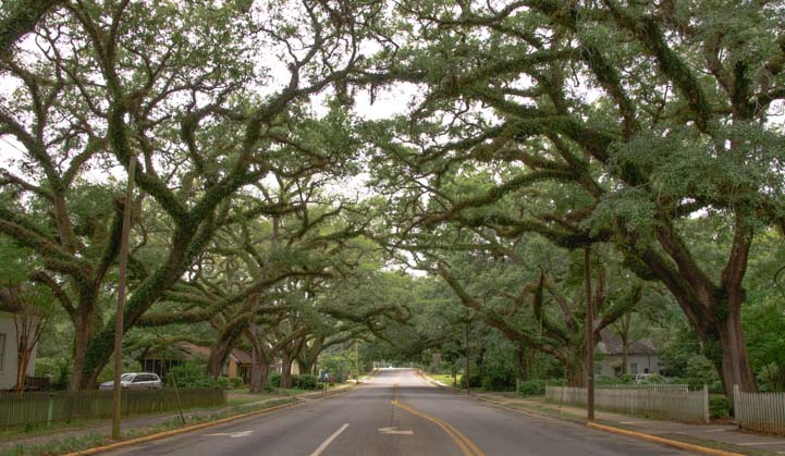 Tree-lined streets in Thomasville Georgia