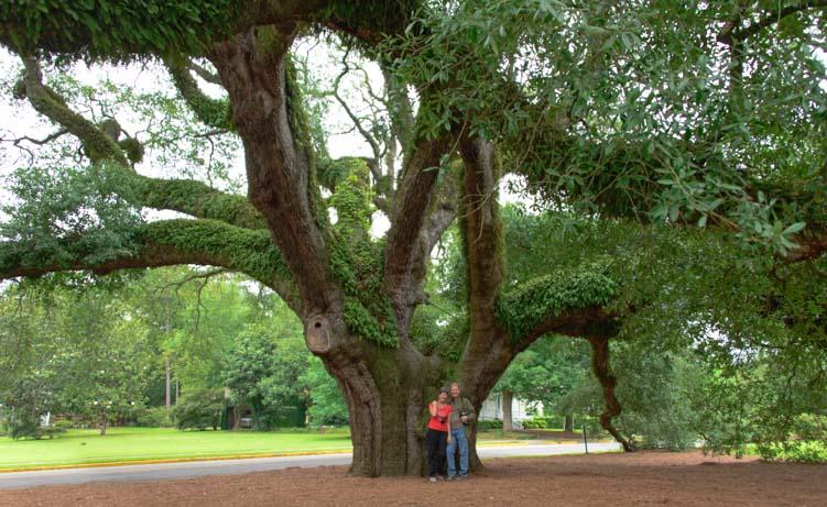 Under the Big Oak in Thomasville Georgia