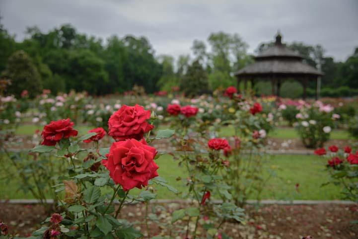 Thomasville Rose Garden in Georgia