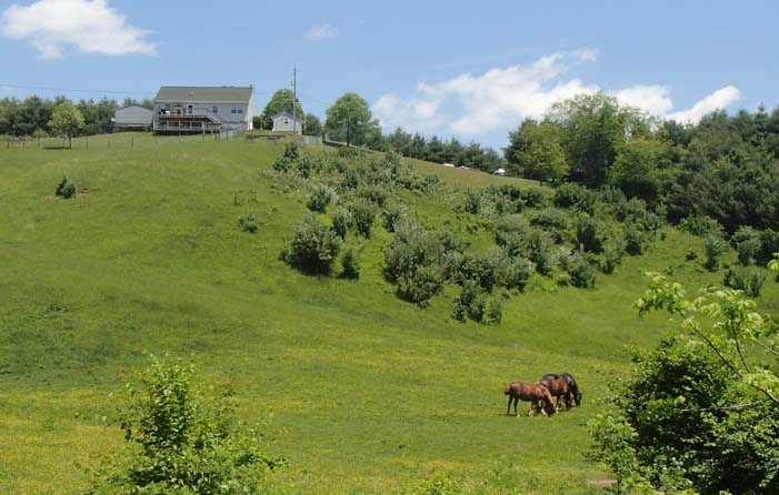 Horses in fields Galax Virginia