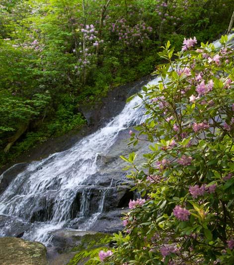 Fallingwater Falls rhododendrons Virginia