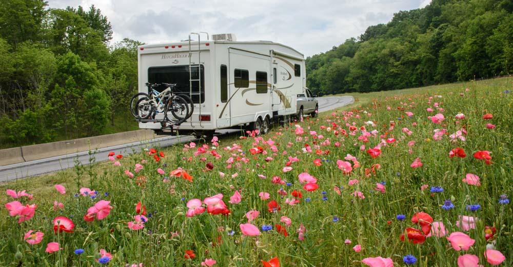 Blue Ridge Parkway North Carolina Wildflowers Everywhere