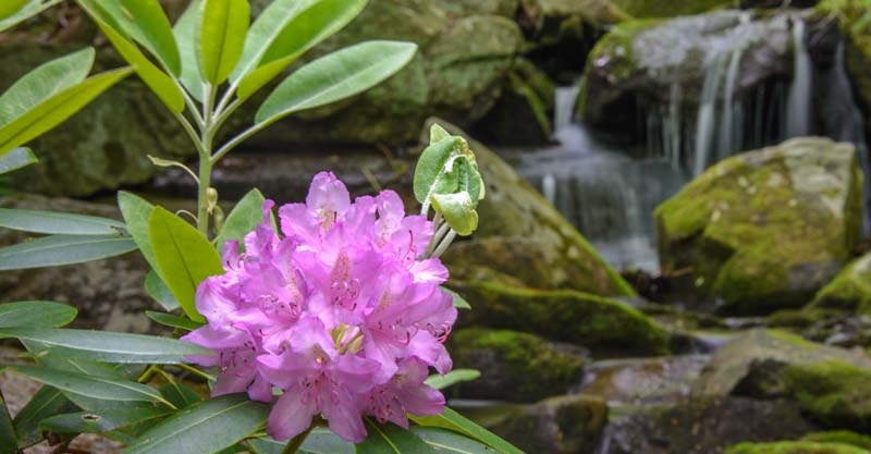 Blue Ridge Parkway Virginia Waterfalls Amp Rhododendrons