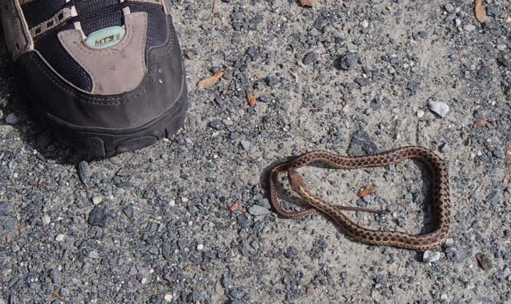 A snake next to a shoe