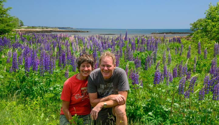 Snuggling in the wild lupine flowers northern Maine