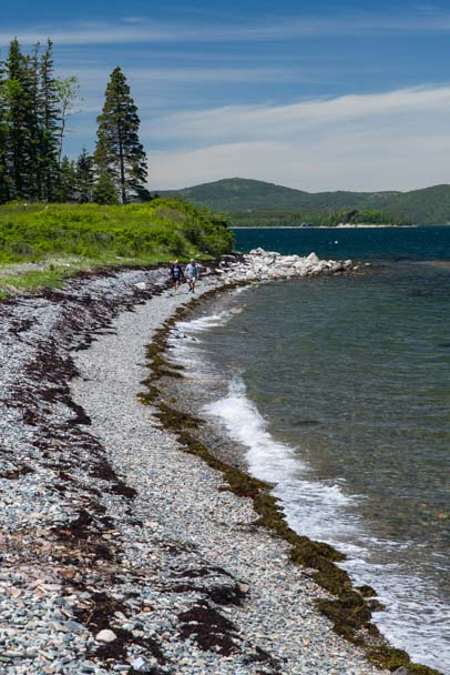 Pebble beach and seaweed Islesford Maine