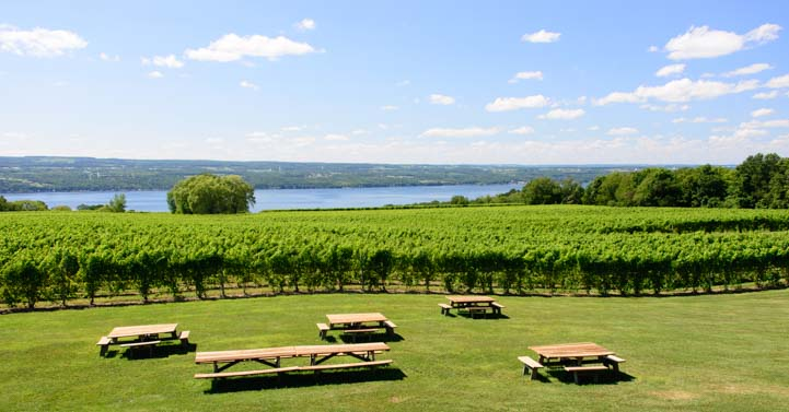 Grape vines Wagner Winery Seneca Lake New York