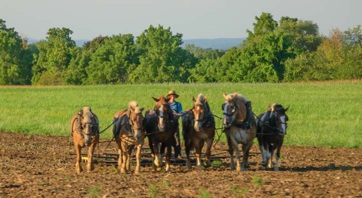 Amish Farming Lodi New York