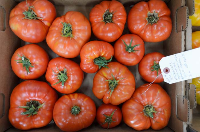 Tomatoes at Seneca Farm Auction Finger Lakes New York