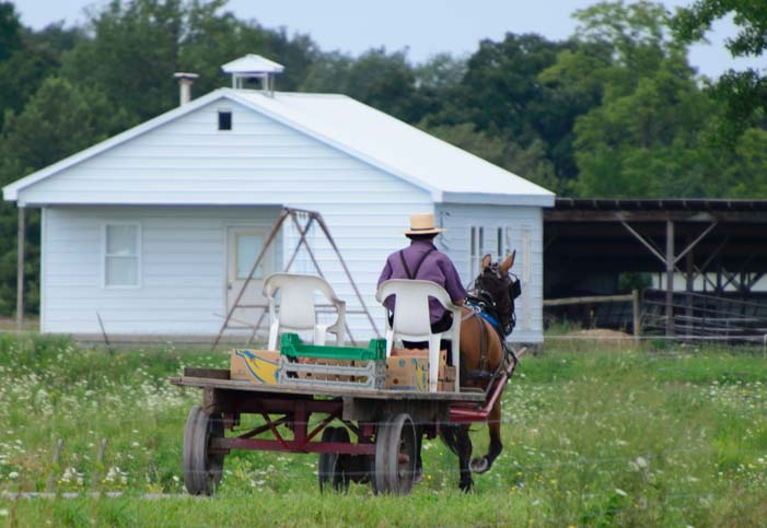 Amish horse and wagon with plastic chairs