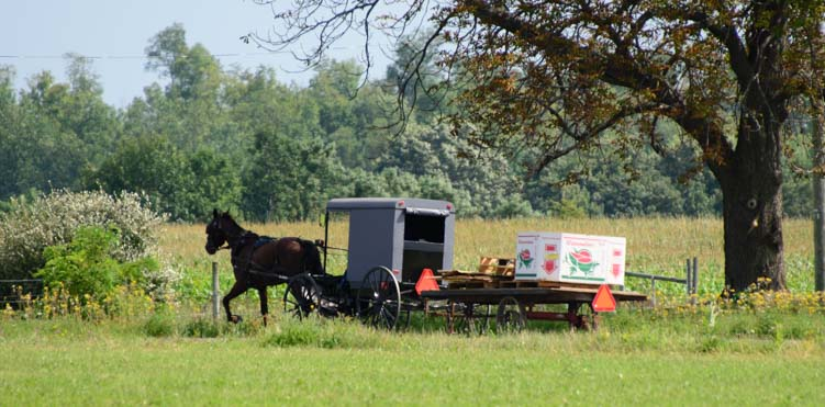 Triple tow Amish horse and buggy and wagon