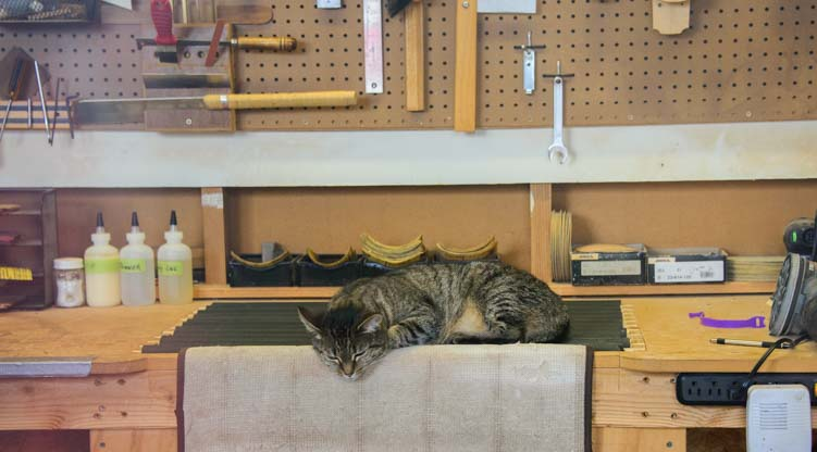 Cat inside a Welch OK storefront