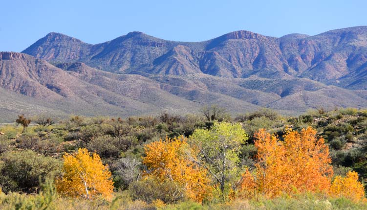 Autumn leaves Sonoran Desert riparian area Roosevelt Lake Arizona