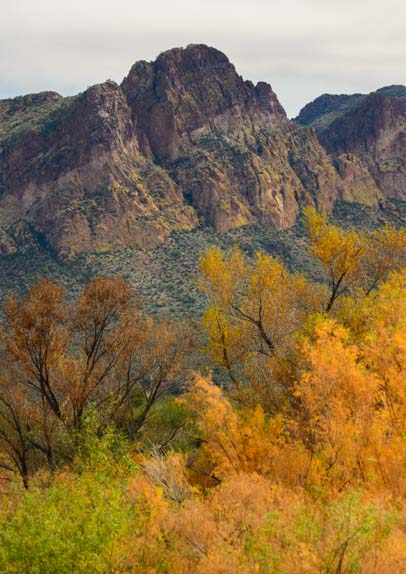 Fall colors in the Sonoran Desert Arizona Salt River