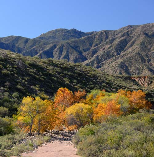 Fall color Sonoran Desert Riparian area Arizona