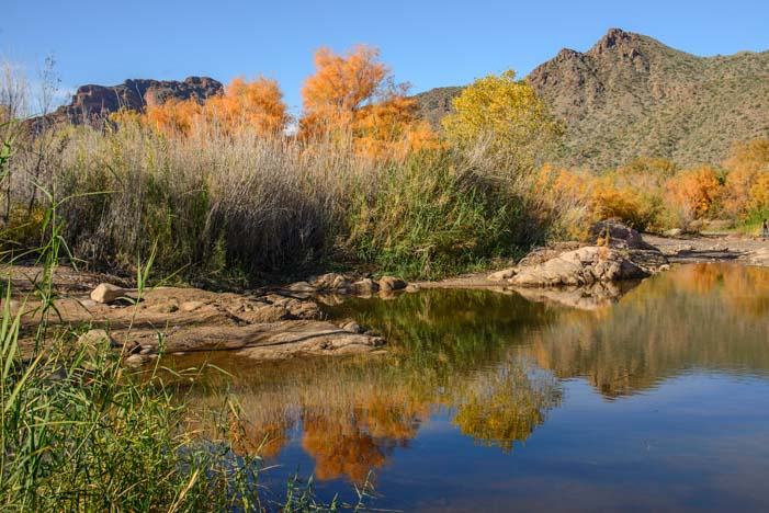 Autumn leaf reflections Salt River Arizona