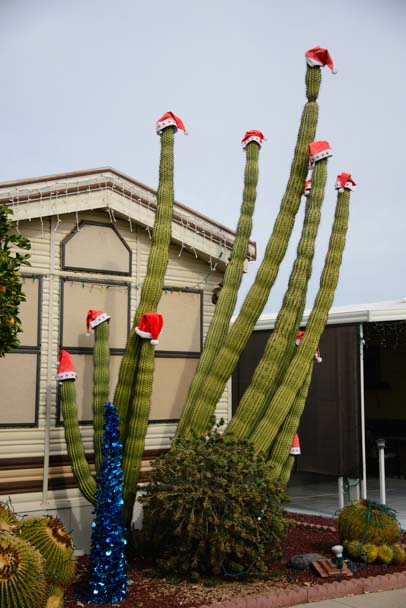 Cactus with Christmas Santa hats ViewPoint RV & Golf Resort AZ