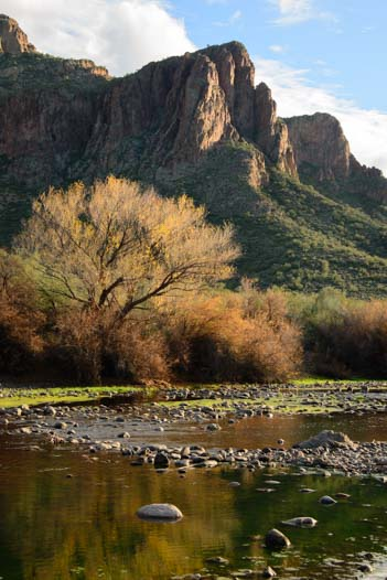 Autumn leaves on Arizona's Salt River