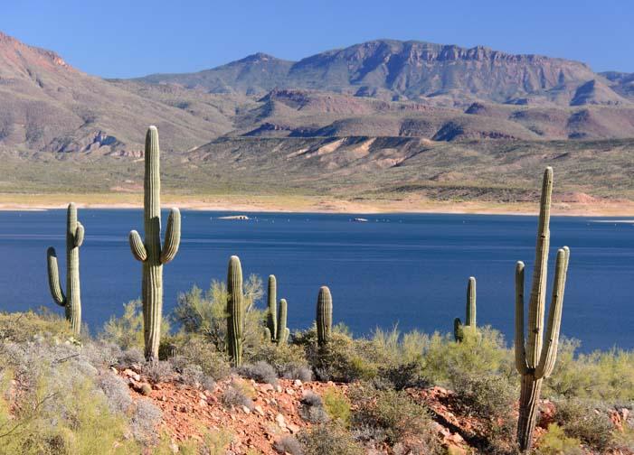 Sonoran Desert saguaro cactus Roosevelt Lake Arizona