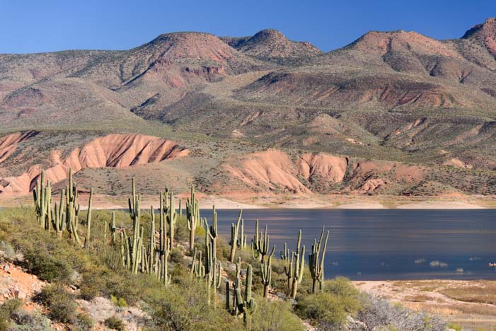 Roosevelt Lake Arizona Saguaro Cactus