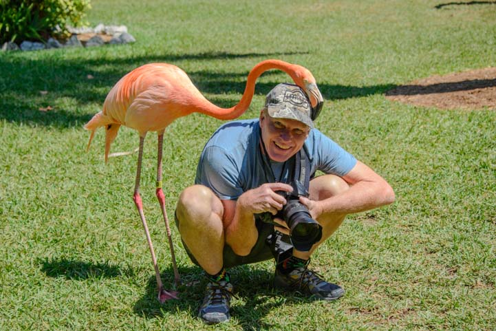 Flamingo Sarasota Florida travel_