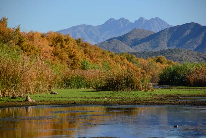 Arizona autumn colors Four Peaks Salt River Bush Highway_