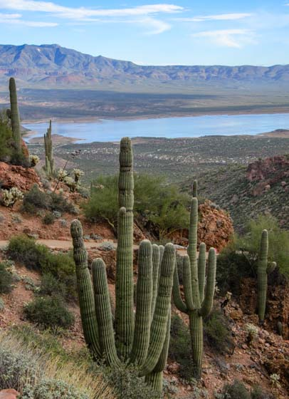 Saguaro cactus Tonto National Monument view of Roosevelt Lake Arizona