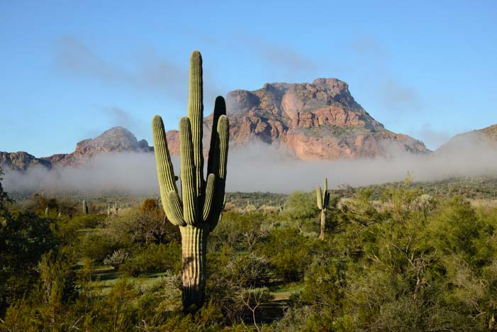 Fog and mist saguaro cactus Arizona Sonoran Desert