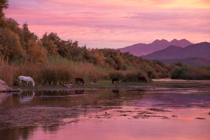 Wild horses Salt River Phoenix Arizona