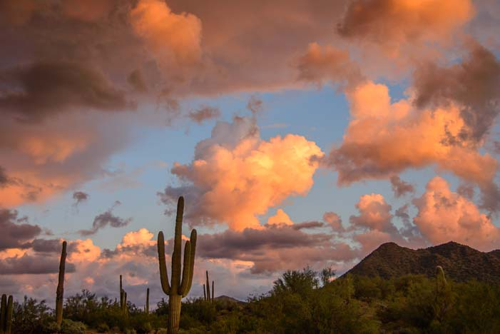 Saguaro Cactus at sunset Arizona