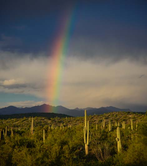 Saguaro cactus under a rainbow in Arizona