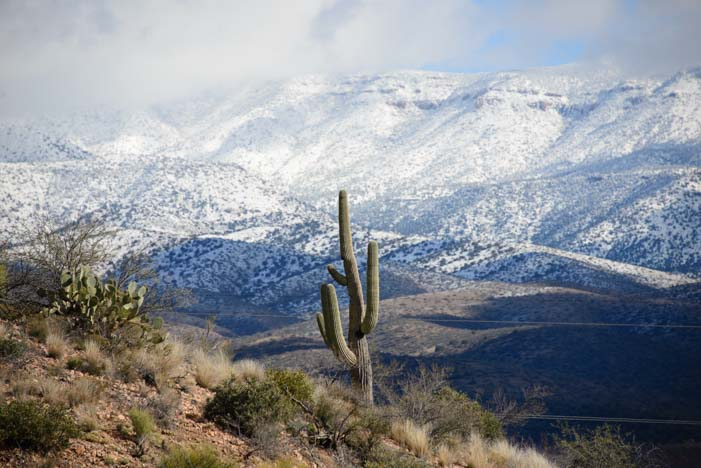 Sonoran Desert in Snow Tonto National Forest Arizona