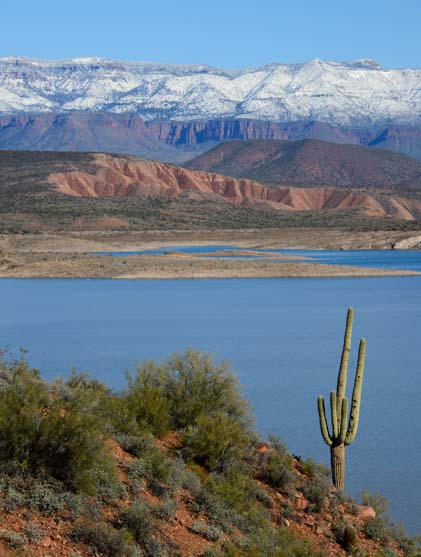 Saguaro cactus snow capped mountains Roosevelt Lake Arizona