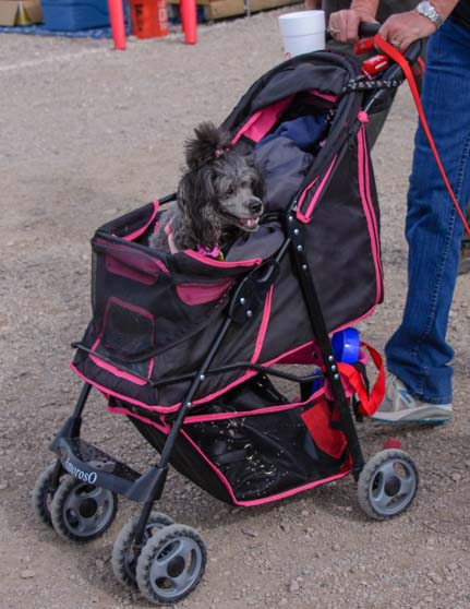 Dog stroller Quartzsite RV Show Arizona