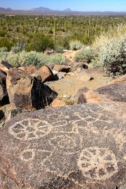 Petroglyphs Saguaro National Park Tucson AZ