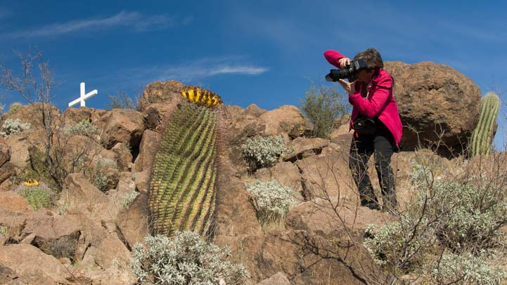 Photographing barrel cactus Arizona