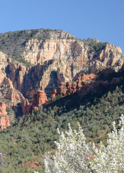 Sedona Arizona rock cliffs and white flowers