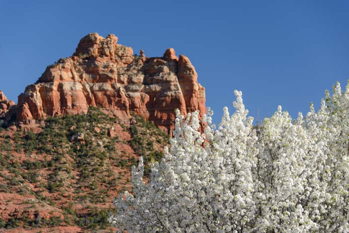 Sedona Arizona red rocks and flowers
